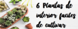 6 Plantas de interior faciles de cultivar.